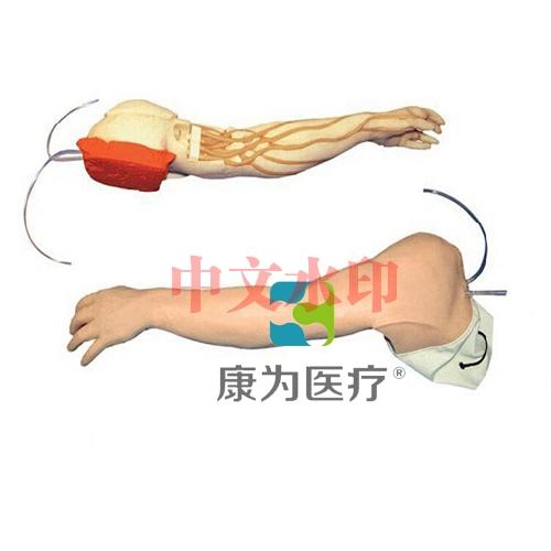 """""""康为医疗""""完整静脉穿刺手臂模型"""