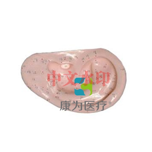 """""""康为医疗""""耳针灸模型1:1(自然大)"""