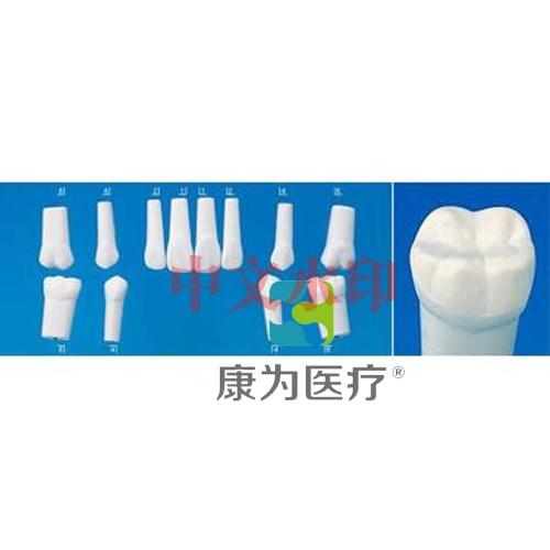 """""""康为医疗""""评价系统用牙体模型"""