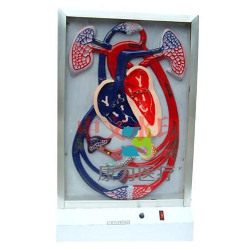 """""""康为医疗""""心脏搏动与血液循环电动模型"""