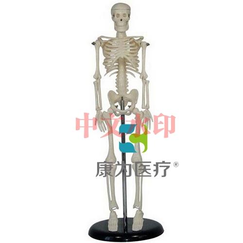 """""""亚博体育网页版登陆医疗""""45CM人体骨骼亚博体育官方版"""