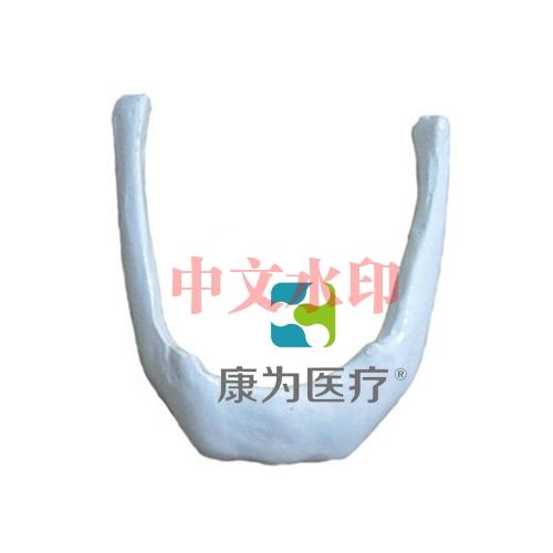 """""""康为医疗""""舌骨模型"""