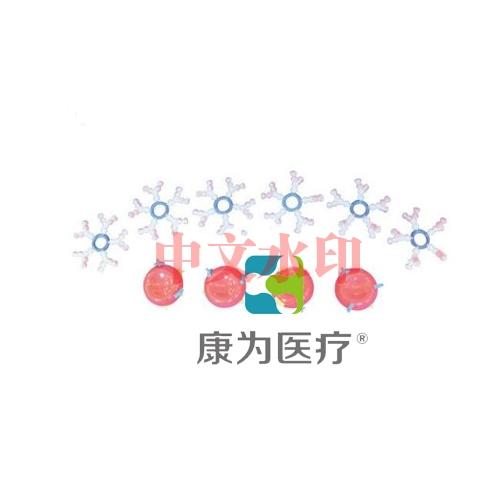 """""""康为医疗""""ABO血型演示模型"""