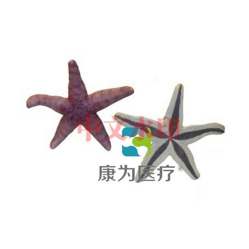 """""""亚博体育网页版登陆医疗""""仿真海星"""