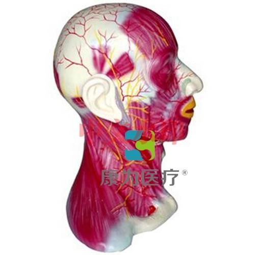 """""""亚博体育网页版登陆医疗""""颈部浅层肌肉血管神经亚博体育官方版"""