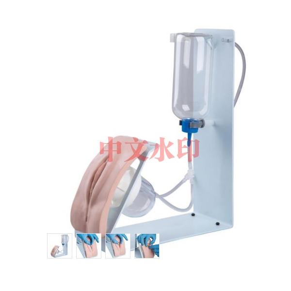 德国3B Scientific®基础版导尿训练模型,女性