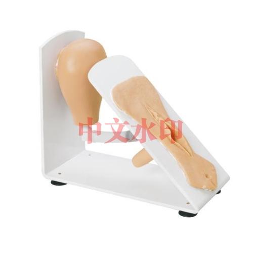 德国3B Scientific®女性导尿培训亚博体育官方版