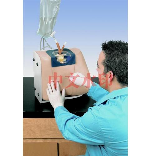 德国3B Scientific®脊椎注射模拟装置