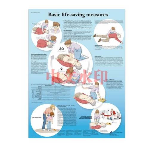 德国3B Scientific® Basic Life Support