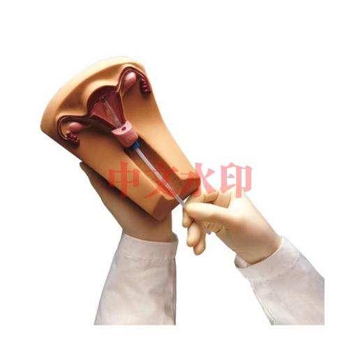 德国3B Scientific®宫内避孕器训练模型