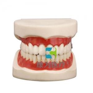 """""""康为医疗""""口腔护理保健模型"""