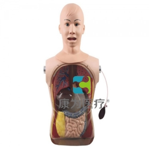 """yzc亚洲城 唯一 官网医疗"" 高级鼻胃管与气管护理模型"