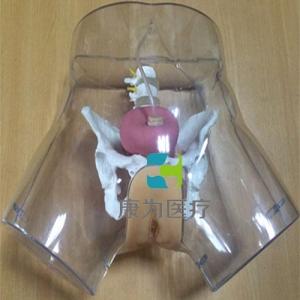 """""""yzc亚洲城 唯一 官网医疗""""高级透明女性导尿模型"""