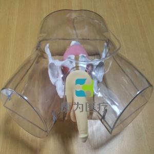 """""""yzc亚洲城 唯一 官网医疗""""高级透明男性导尿模型"""