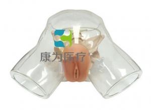 """""""yzc亚洲城 唯一 官网医疗""""透明女性导尿模型"""