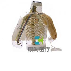 """""""yzc亚洲城 唯一 官网医疗""""高级上臂肌肉注射及对比模型(带检测警示系统)"""