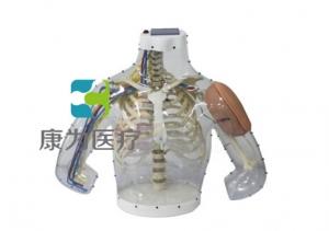 """yzc亚洲城 唯一 官网医疗""高级上臂肌内注射操作及对比模型"