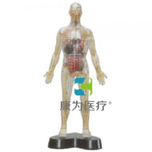 """""""康为医疗""""透明人体针灸模型(透明可见骨骼.内脏)"""
