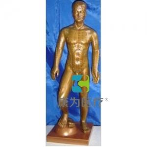 """""""康为医疗""""运动式古铜色人体针灸模型(85CM)"""