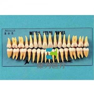 """""""康为医疗""""复制恒牙模型(B3-305)"""