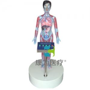 """""""亚博体育网页版登陆医疗""""LED互动吸毒体验装置(吸毒者人体血液器官变化系统)五键"""