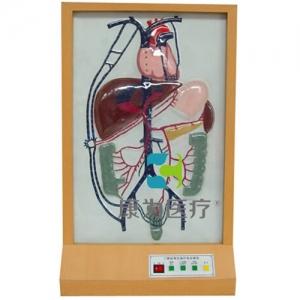"""""""亚博体育网页版登陆医疗""""门静脉侧支循环电动亚博体育官方版"""