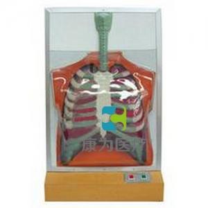 """""""亚博体育网页版登陆医疗""""人体呼吸运动电动亚博体育官方版"""