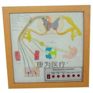 """""""亚博体育网页版登陆医疗""""脊神经的组成和分布电动亚博体育官方版"""