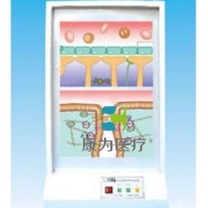 """yzc亚洲城 唯一 官网医疗""脑屏幕电动模型"