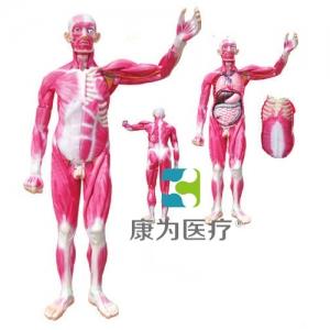 """""""亚博体育网页版登陆医疗""""全身肌肉解剖附内脏器官亚博体育官方版"""