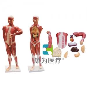 """""""亚博体育网页版登陆医疗""""人体肌肉及胸腹腔脏器解剖亚博体育官方版"""