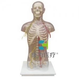 """""""康为医疗""""男性躯干骨附主要动脉和神经分布"""