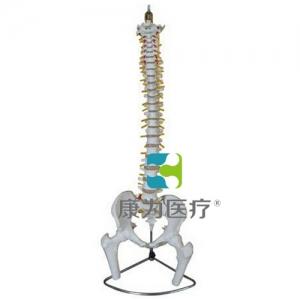 """""""亚博体育网页版登陆医疗""""脊柱、骨盆与股骨头亚博体育官方版"""