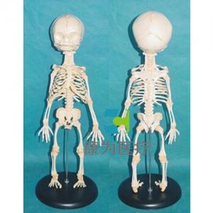 """""""亚博体育网页版登陆医疗""""高级胎儿骨骼亚博体育官方版"""