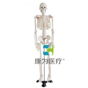 """""""康为医疗""""85cm人体骨骼模型"""