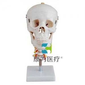 """""""康为医疗""""头颅骨带脊椎模型"""