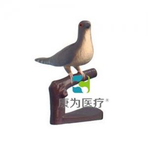 """""""亚博体育网页版登陆医疗""""仿真杜鹃"""
