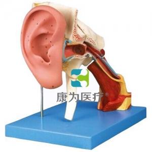 """""""康为医疗""""耳结构放大模型"""