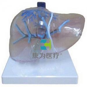 """大同""""康为医疗""""透明肝脏模型"""