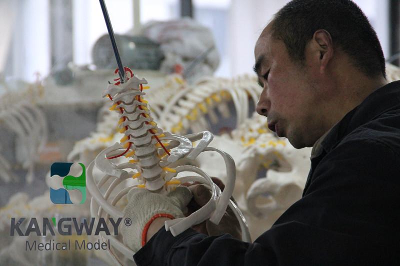 亚博体育网页版登陆医疗亚博体育官方版生产组装生产线